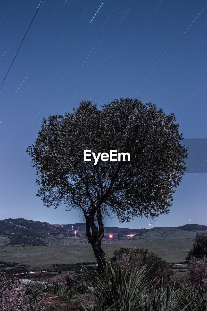 tree, nature, beauty in nature, sky, clear sky, scenics, no people, tranquil scene, tranquility, blue, outdoors, growth, night, illuminated, star - space, mountain, moon, astronomy, star trail, galaxy