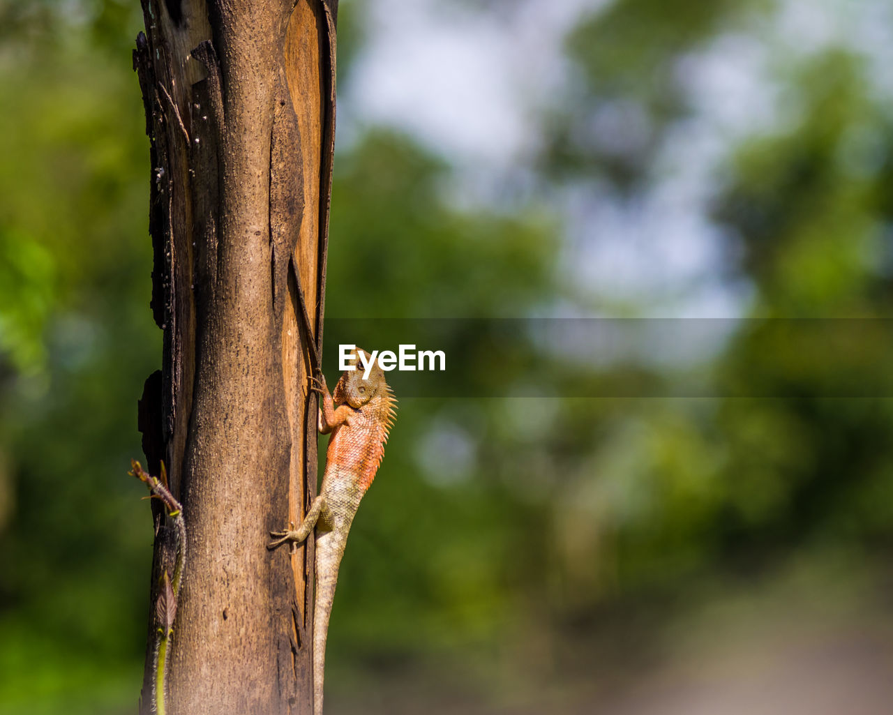 focus on foreground, animals in the wild, tree, animal wildlife, tree trunk, trunk, close-up, one animal, day, plant, animal themes, animal, no people, nature, outdoors, growth, invertebrate, vertebrate, selective focus, beauty in nature