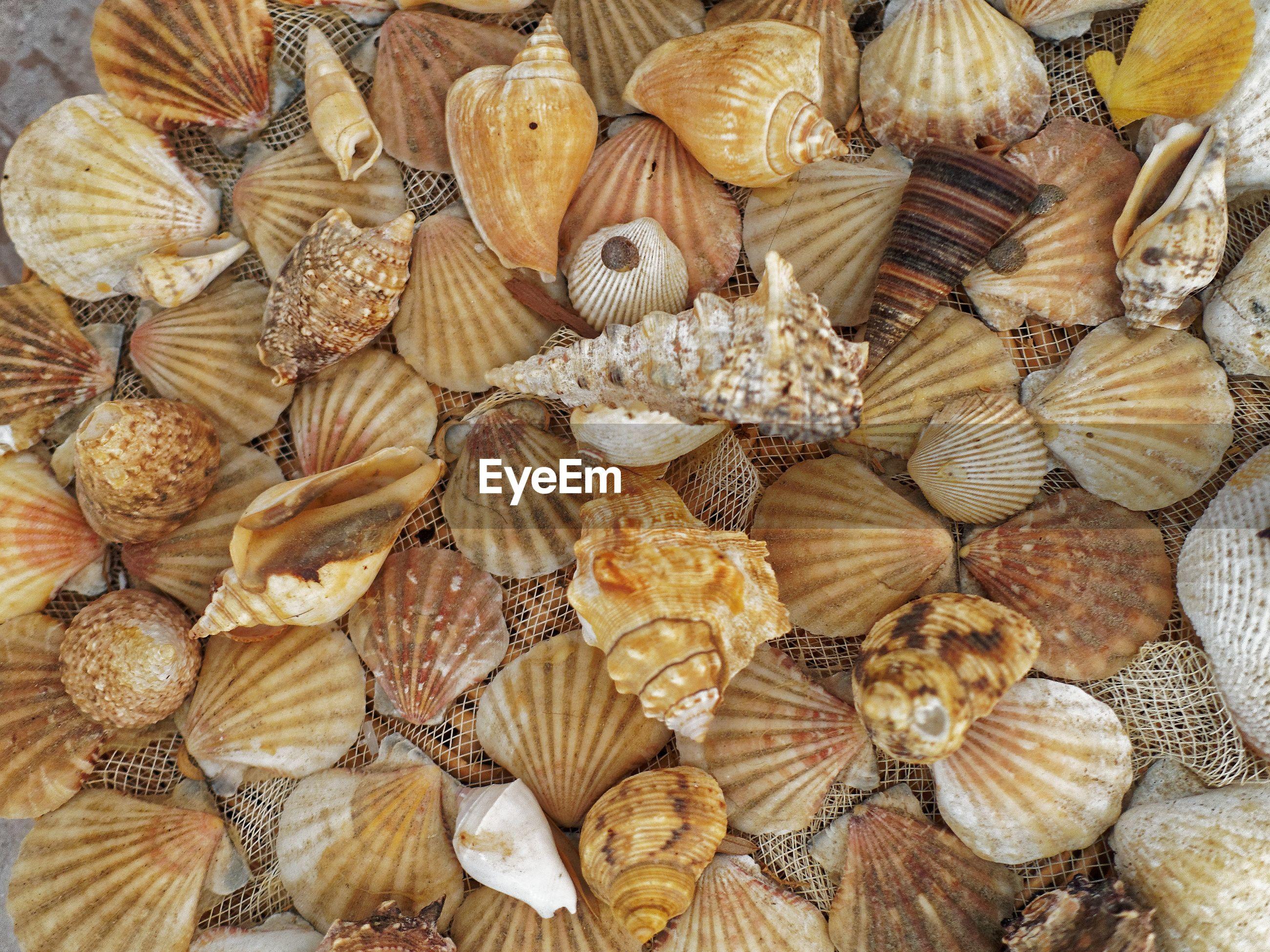 Full frame shot of various seashells on net