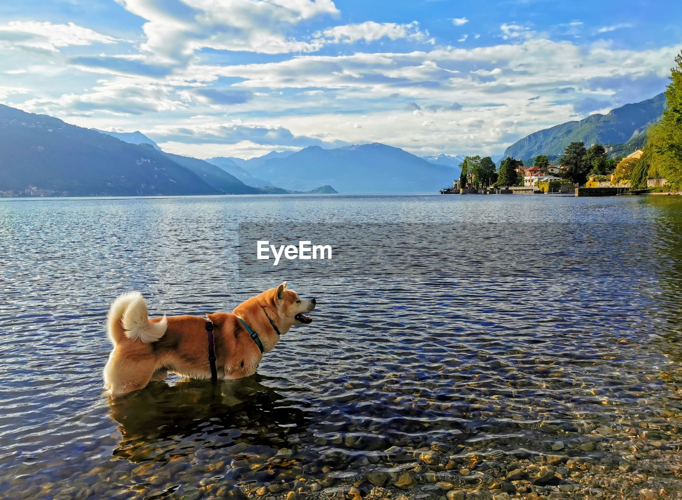 VIEW OF A DOG ON LAKE