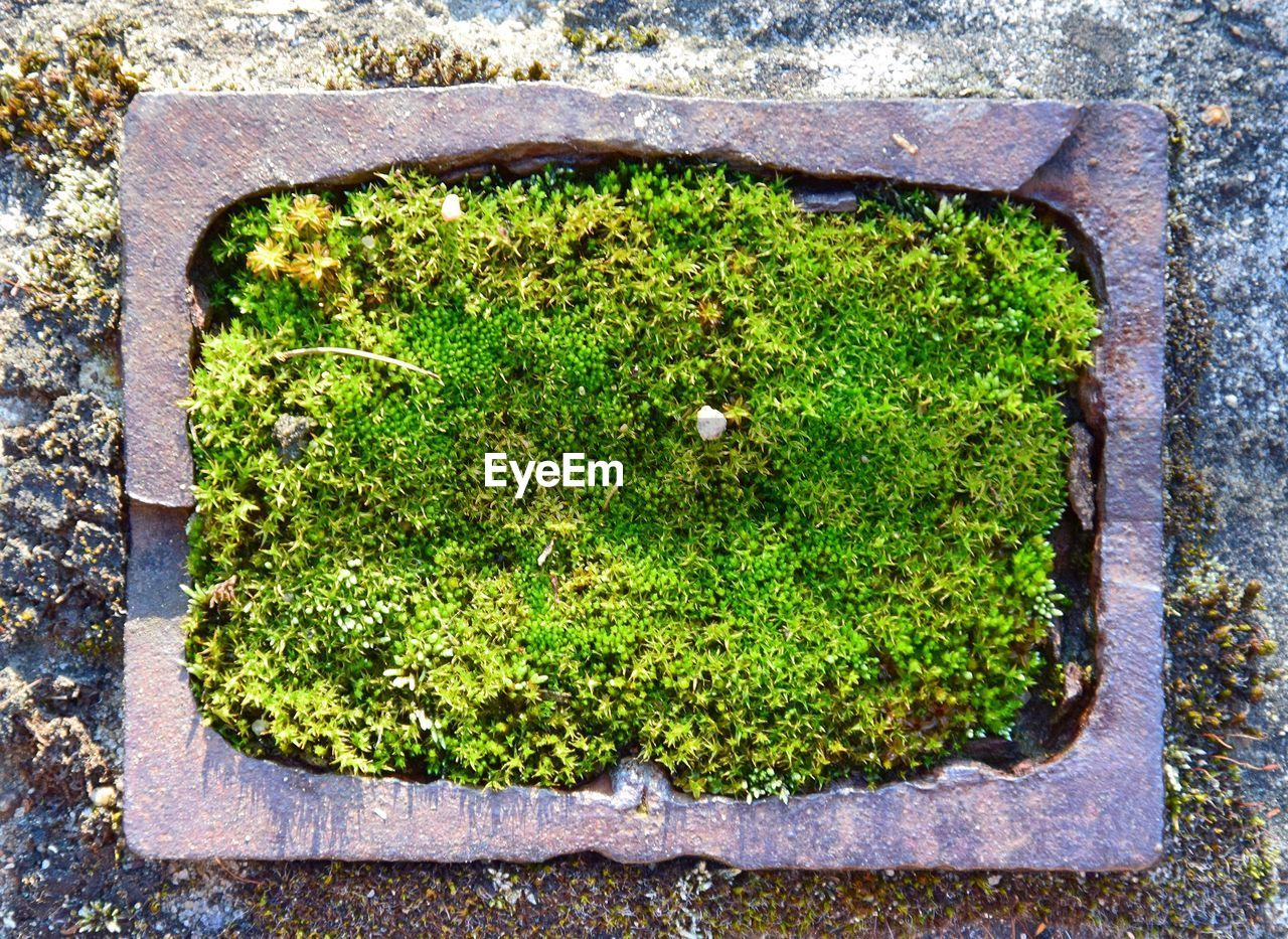 green color, no people, moss, plant, outdoors, growth, day, nature, close-up