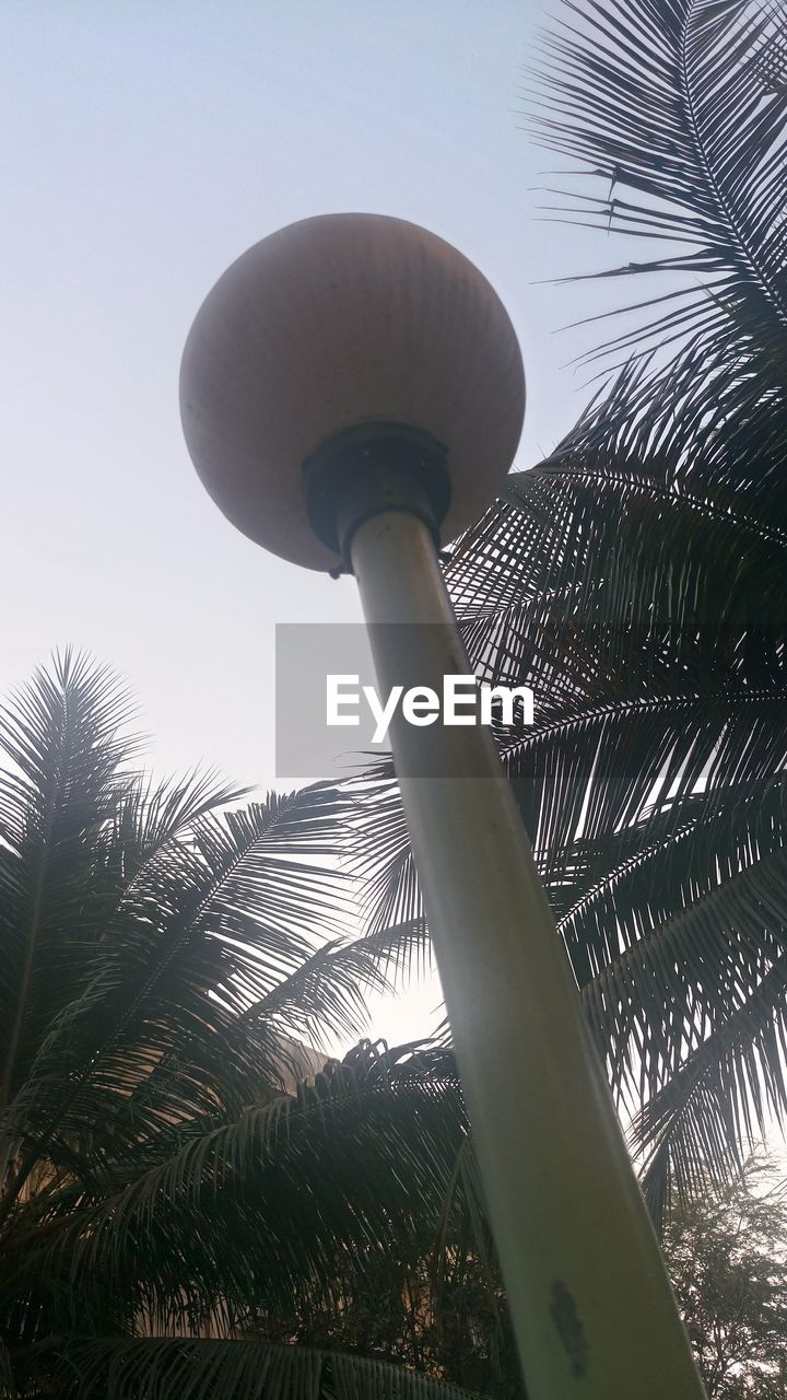 low angle view, palm tree, no people, day, outdoors, built structure, architecture, nature, sky, clear sky, tree, close-up