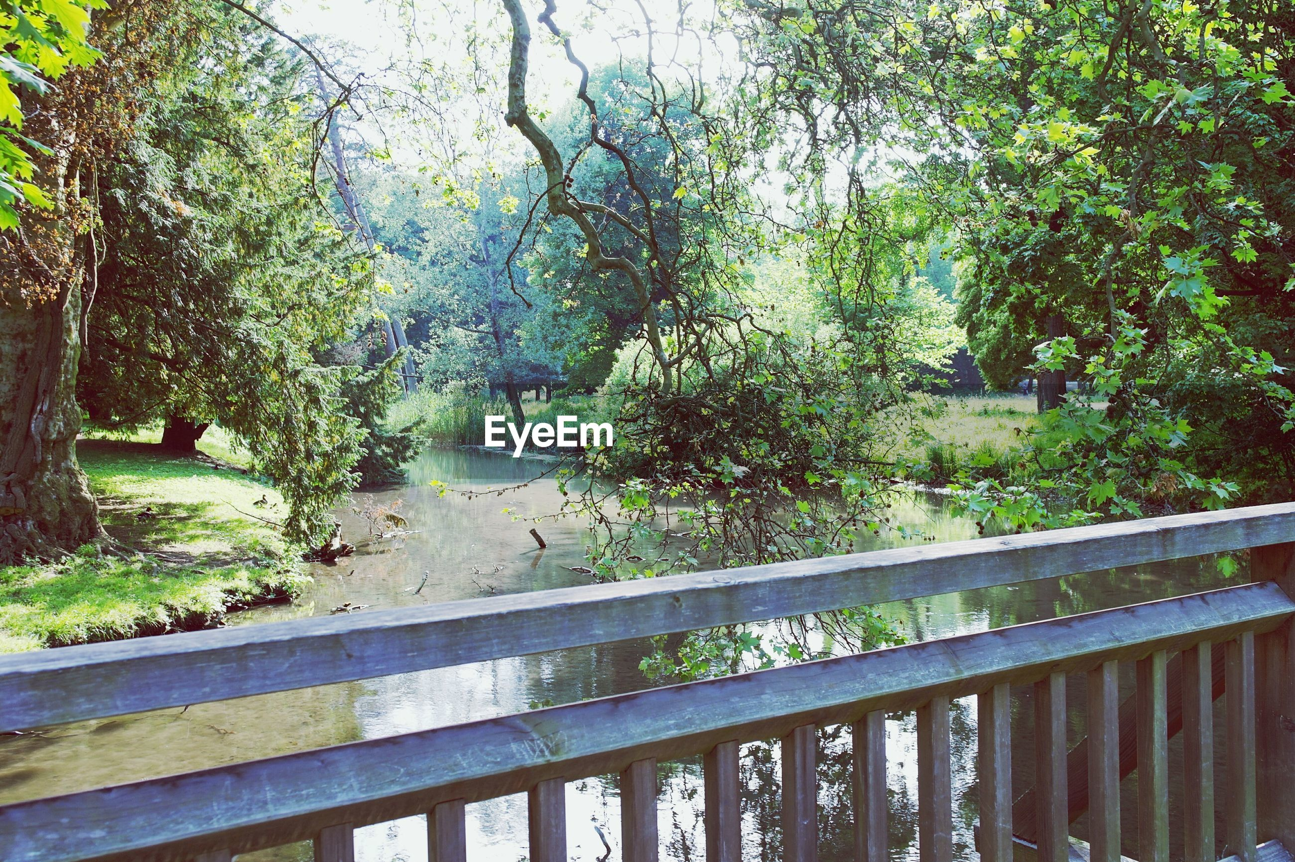 tree, railing, growth, water, green color, nature, footbridge, tranquility, branch, beauty in nature, plant, park - man made space, bridge - man made structure, fence, day, outdoors, sunlight, tranquil scene, lush foliage, scenics