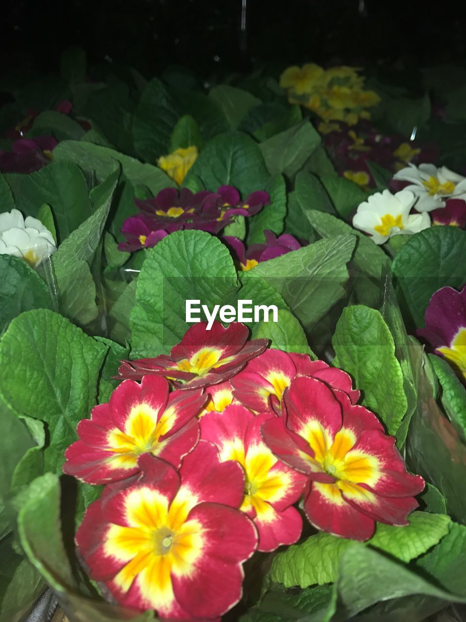 flower, leaf, petal, growth, freshness, beauty in nature, fragility, plant, nature, flower head, no people, green color, outdoors, blooming, day, close-up