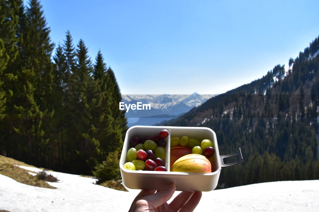 food and drink, mountain, fruit, healthy eating, food, day, nature, freshness, wellbeing, tree, plant, beauty in nature, sunlight, sky, scenics - nature, bowl, non-urban scene, mountain range, human hand, outdoors