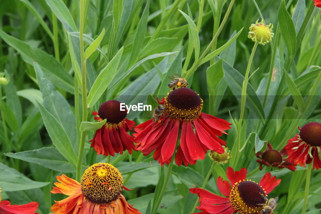 flowering plant, flower, fragility, plant, freshness, growth, vulnerability, flower head, beauty in nature, petal, inflorescence, close-up, coneflower, pollen, nature, green color, day, no people, leaf, plant part, outdoors, pollination