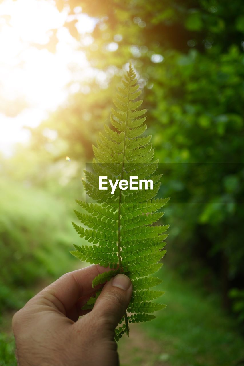 human hand, hand, leaf, plant part, green color, human body part, plant, one person, holding, growth, body part, nature, day, close-up, focus on foreground, finger, unrecognizable person, lifestyles, human finger, real people, outdoors, leaves, human limb
