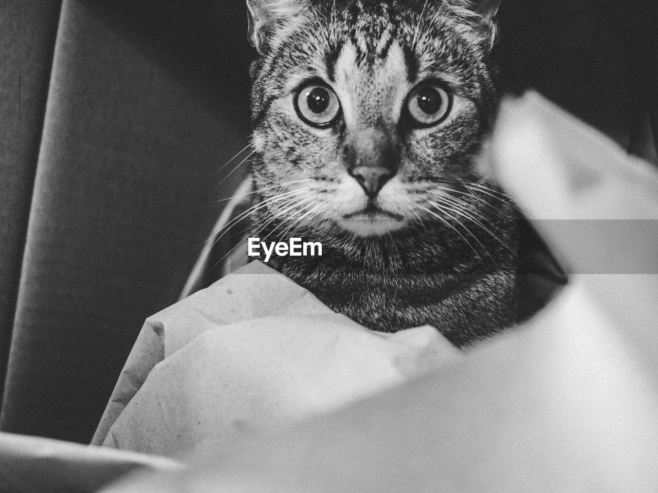 one animal, looking at camera, domestic cat, animal themes, pets, indoors, mammal, domestic animals, portrait, feline, close-up, no people, day