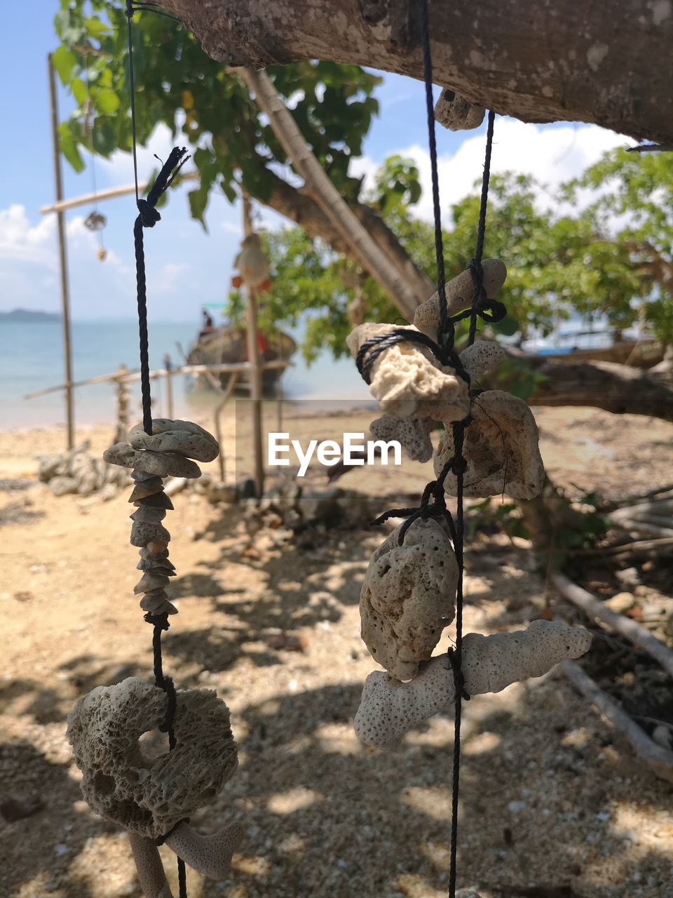 focus on foreground, no people, nature, day, plant, outdoors, close-up, tree, sunlight, land, hanging, growth, rope, tranquility, sand, sky, solid, landscape, beauty in nature, wood - material