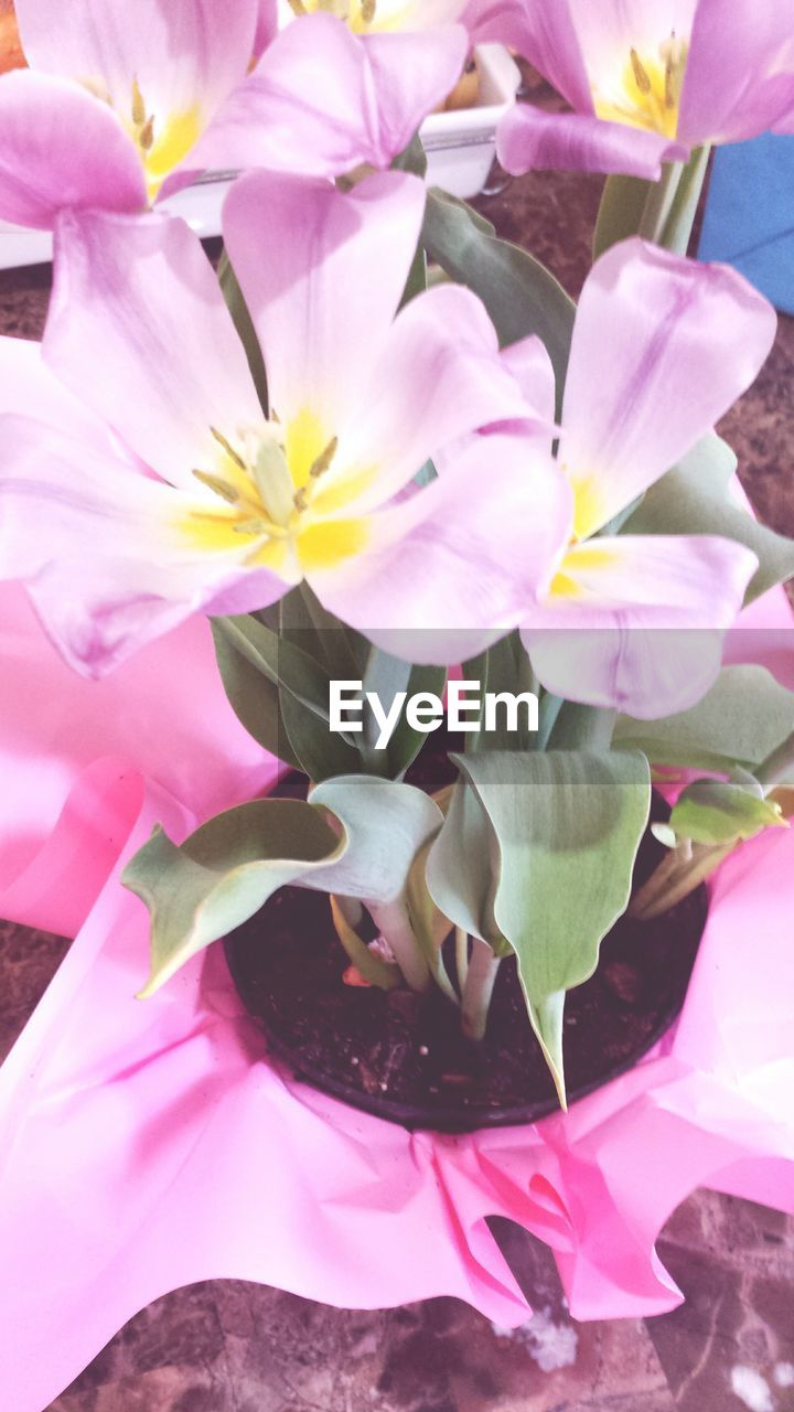 flower, pink color, growth, petal, no people, nature, plant, close-up, fragility, beauty in nature, freshness, outdoors, flower head, day