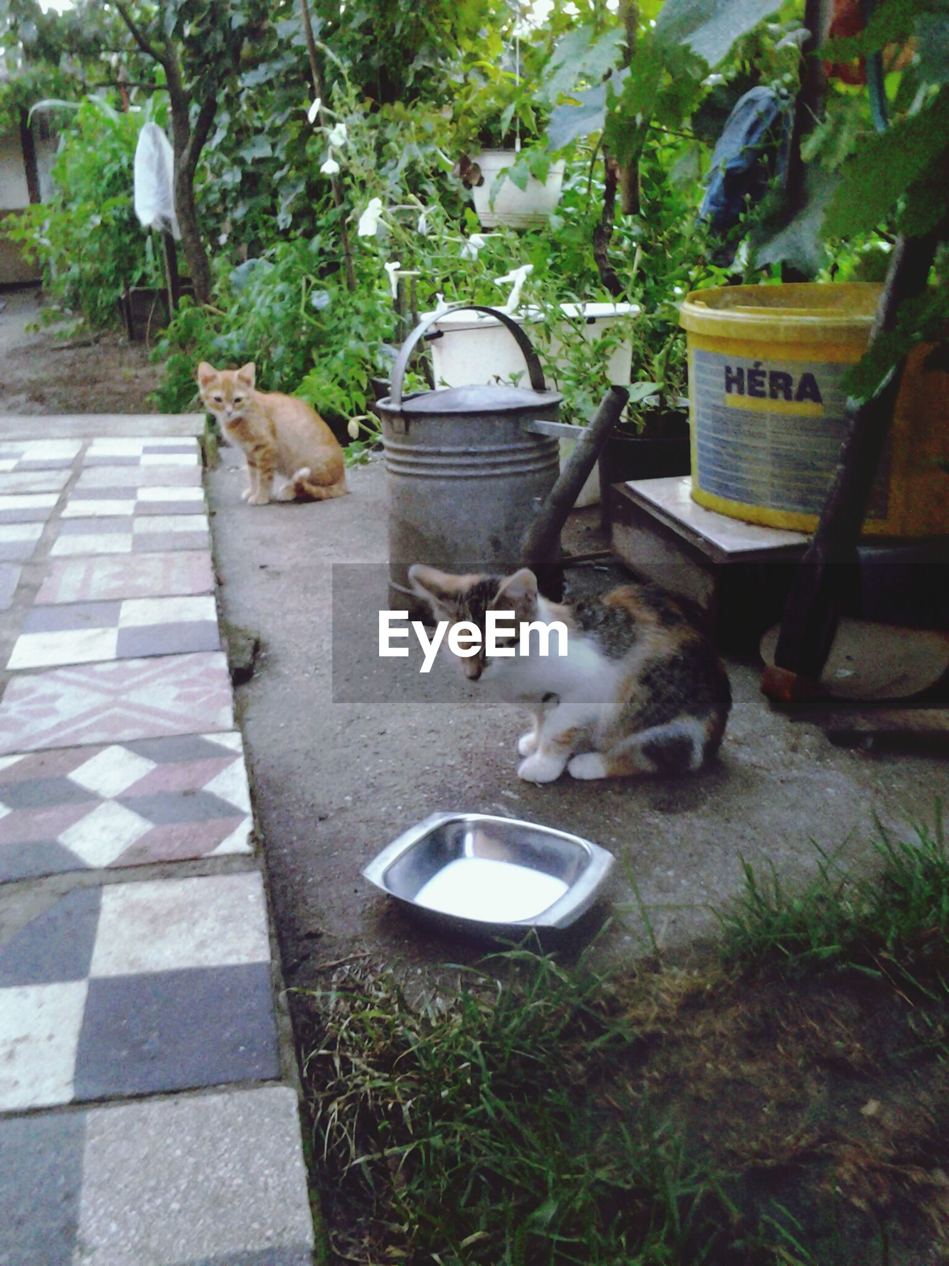 domestic animals, animal themes, pets, mammal, one animal, domestic cat, cat, feline, plant, relaxation, sitting, high angle view, potted plant, outdoors, front or back yard, dog, day, full length, two animals, no people