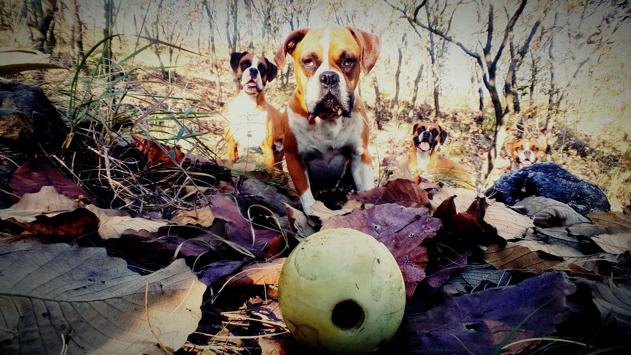 Dogs On Field In Forest