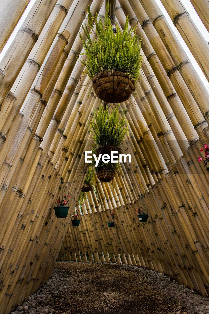 Tilt image of wood