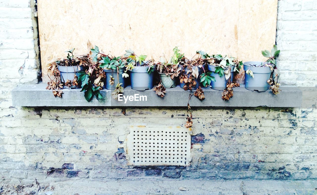 wall - building feature, outdoors, no people, pipe - tube, architecture, day, built structure, building exterior, rusty, plant