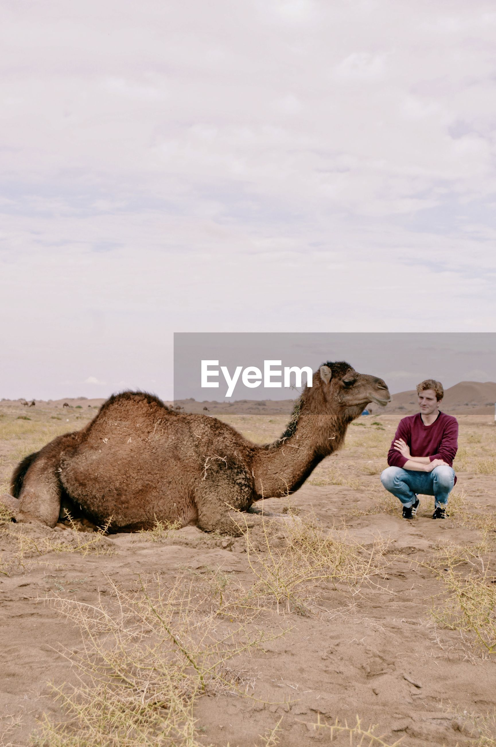 Full length of man sitting on land against sky and next to camel in a desert