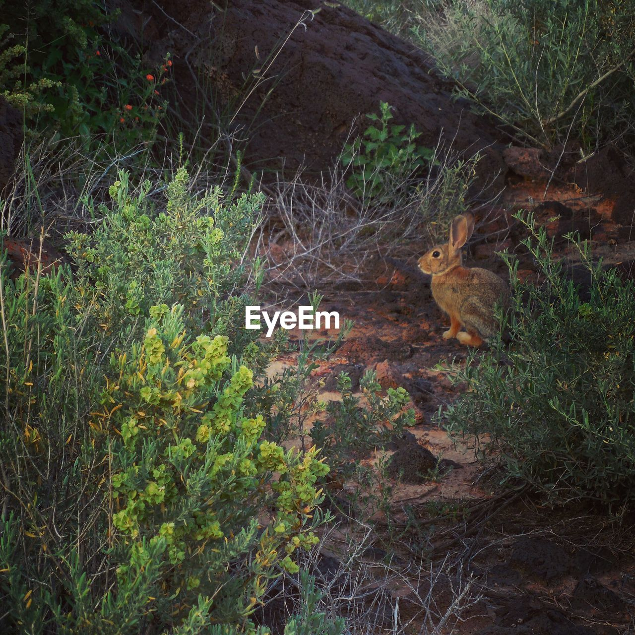 one animal, animal themes, mammal, domestic cat, high angle view, fox, plant, no people, squirrel, outdoors, nature, animals in the wild, grass, day, pets, sitting