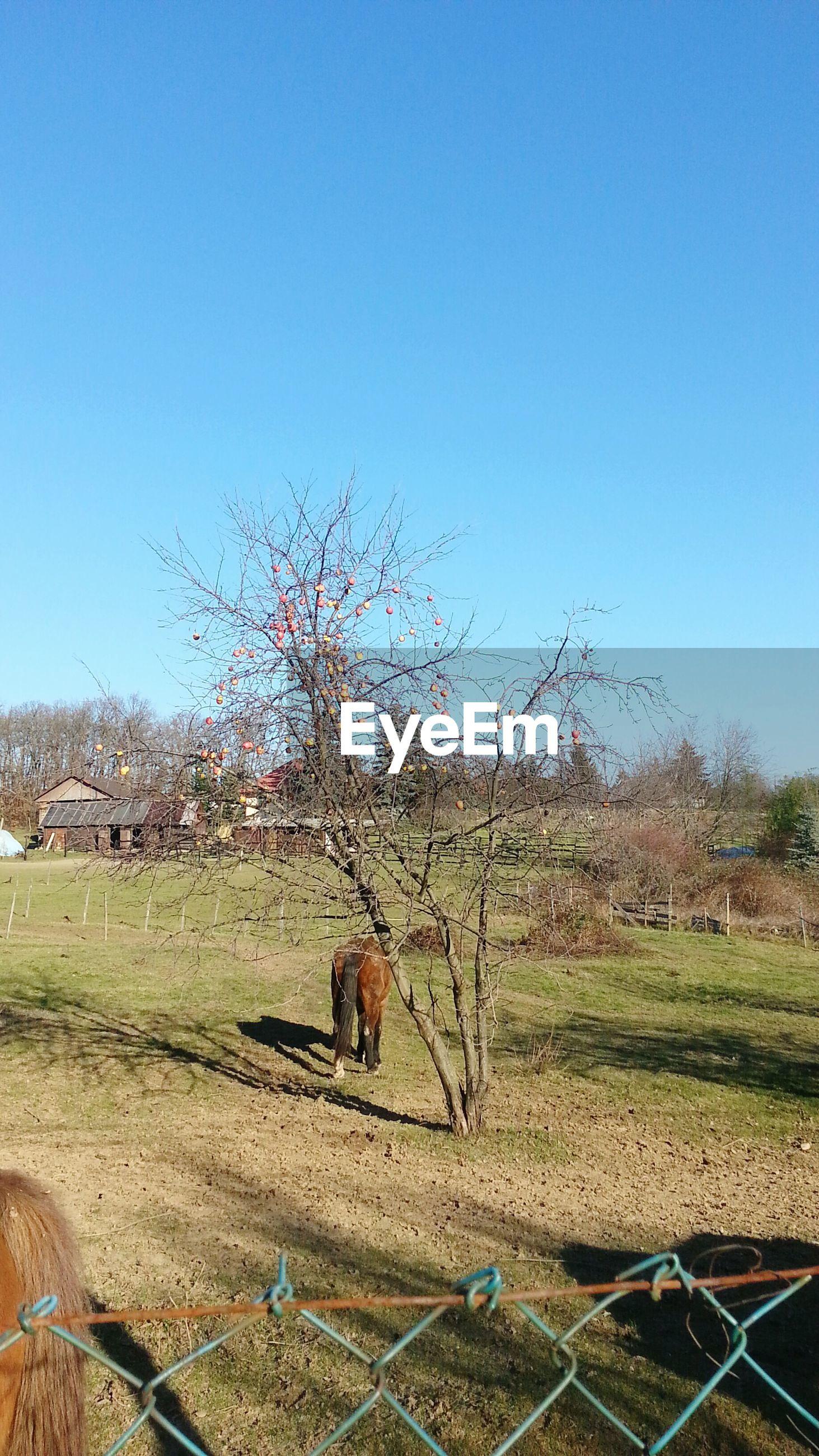 Farm against clear blue sky
