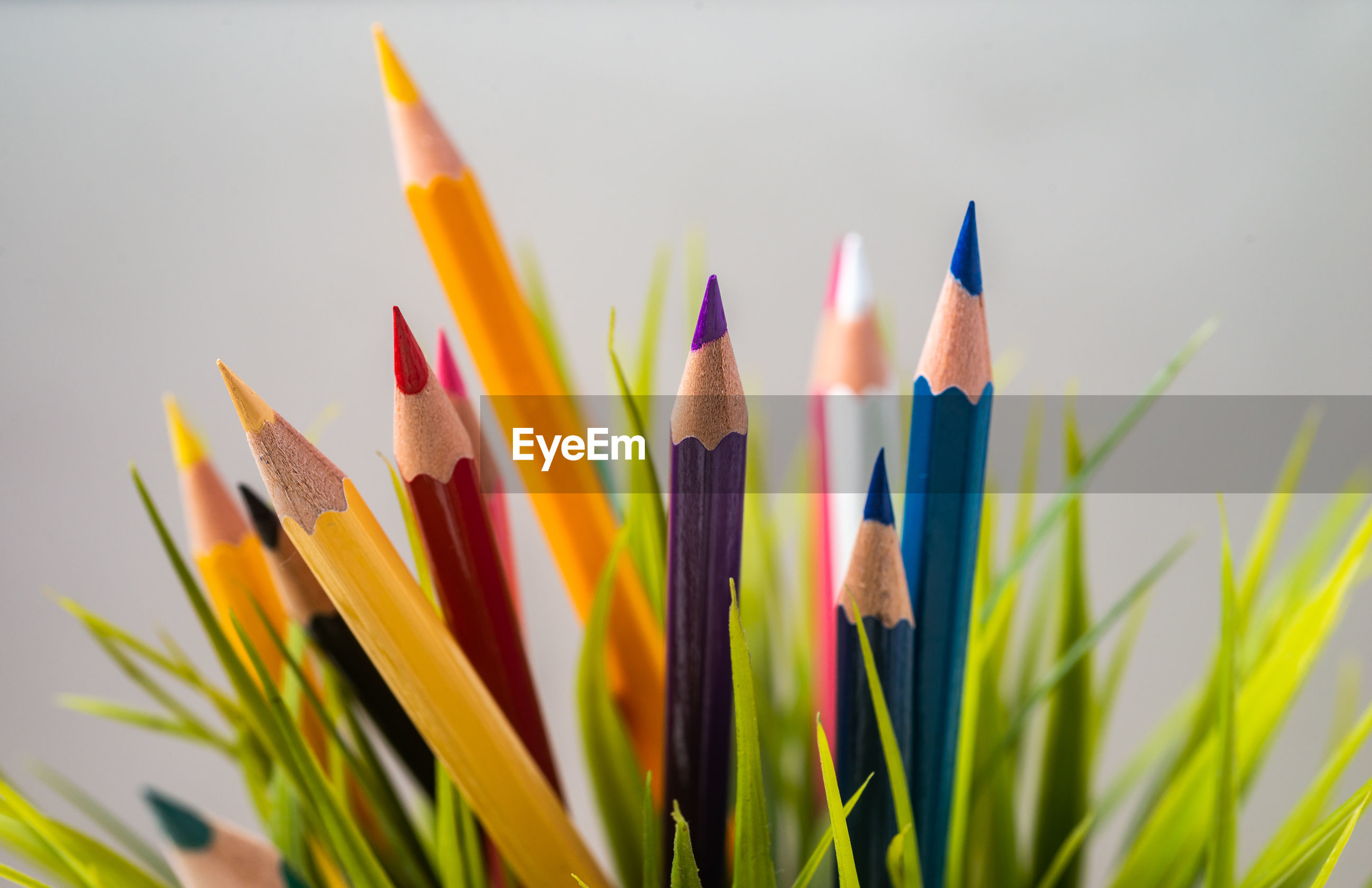 Close-up of colored pencils with plants against white background