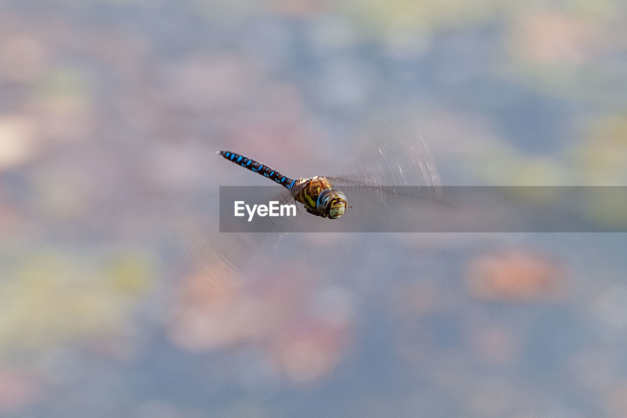 invertebrate, insect, one animal, animal themes, animals in the wild, animal wildlife, close-up, animal, focus on foreground, day, nature, no people, animal wing, outdoors, flying, selective focus, mid-air, arthropod, fragility, beauty in nature