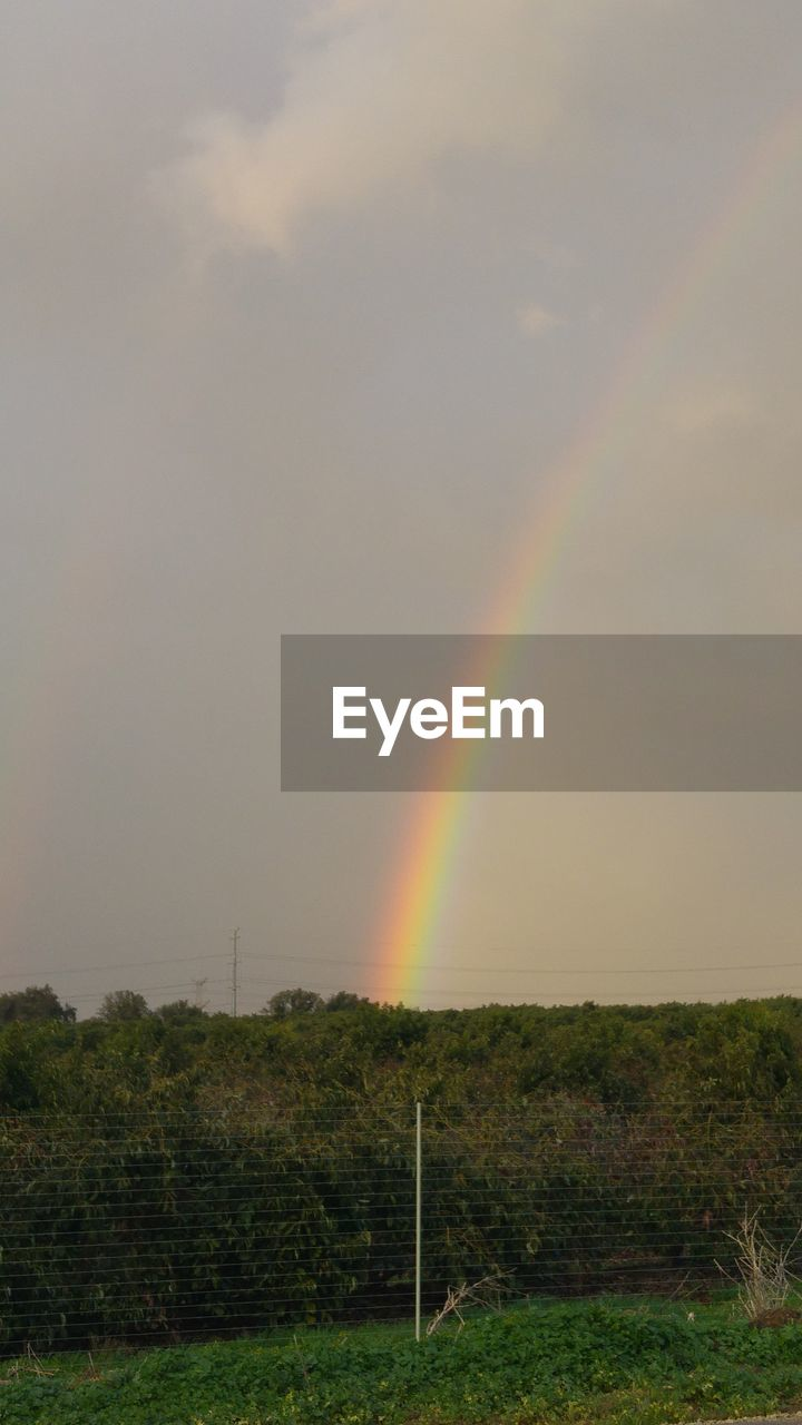 rainbow, double rainbow, beauty in nature, scenics, tranquil scene, nature, tranquility, no people, field, idyllic, sky, multi colored, landscape, outdoors, cloud - sky, day, tree, grass