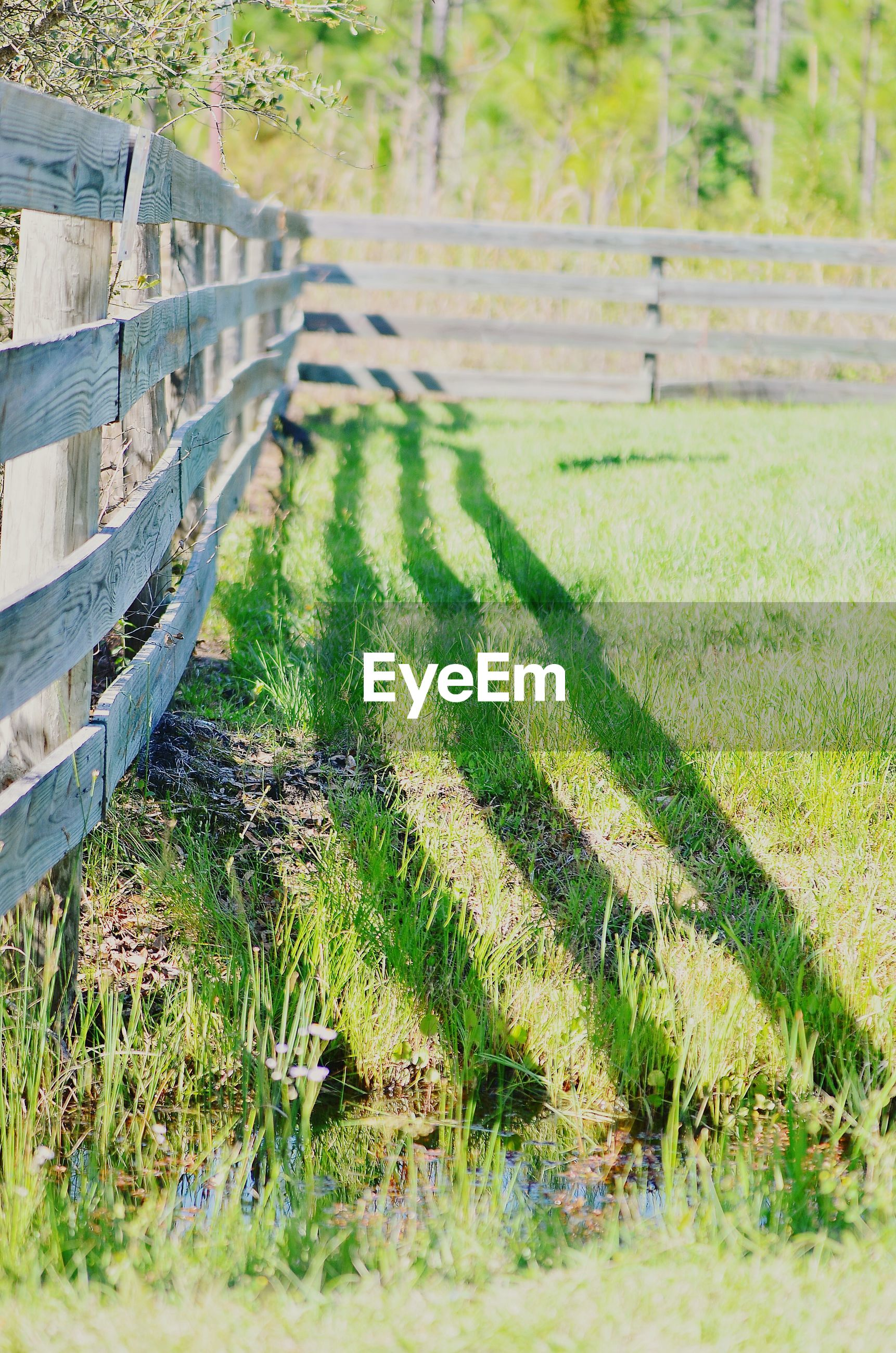 Shadow of plank fence on grass