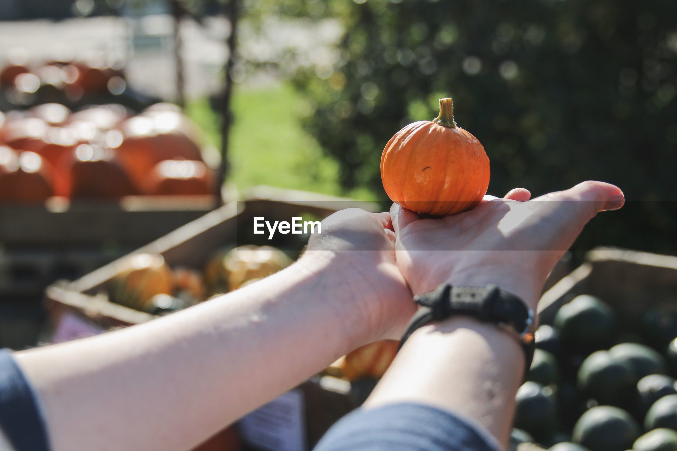 Cropped hands of person holding pumpkin