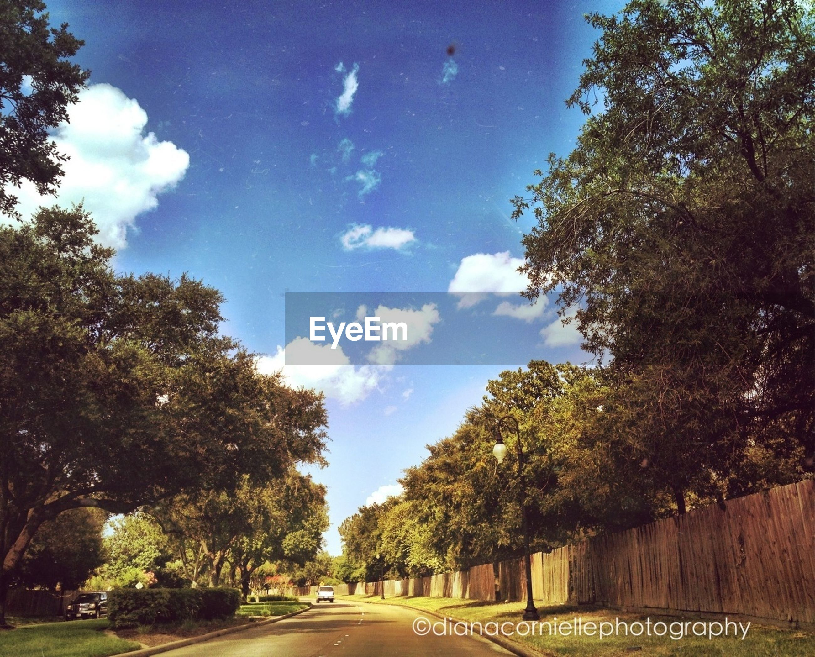 tree, the way forward, road, transportation, sky, diminishing perspective, vanishing point, street, blue, road marking, cloud - sky, empty, empty road, tranquility, nature, country road, long, cloud, growth, day