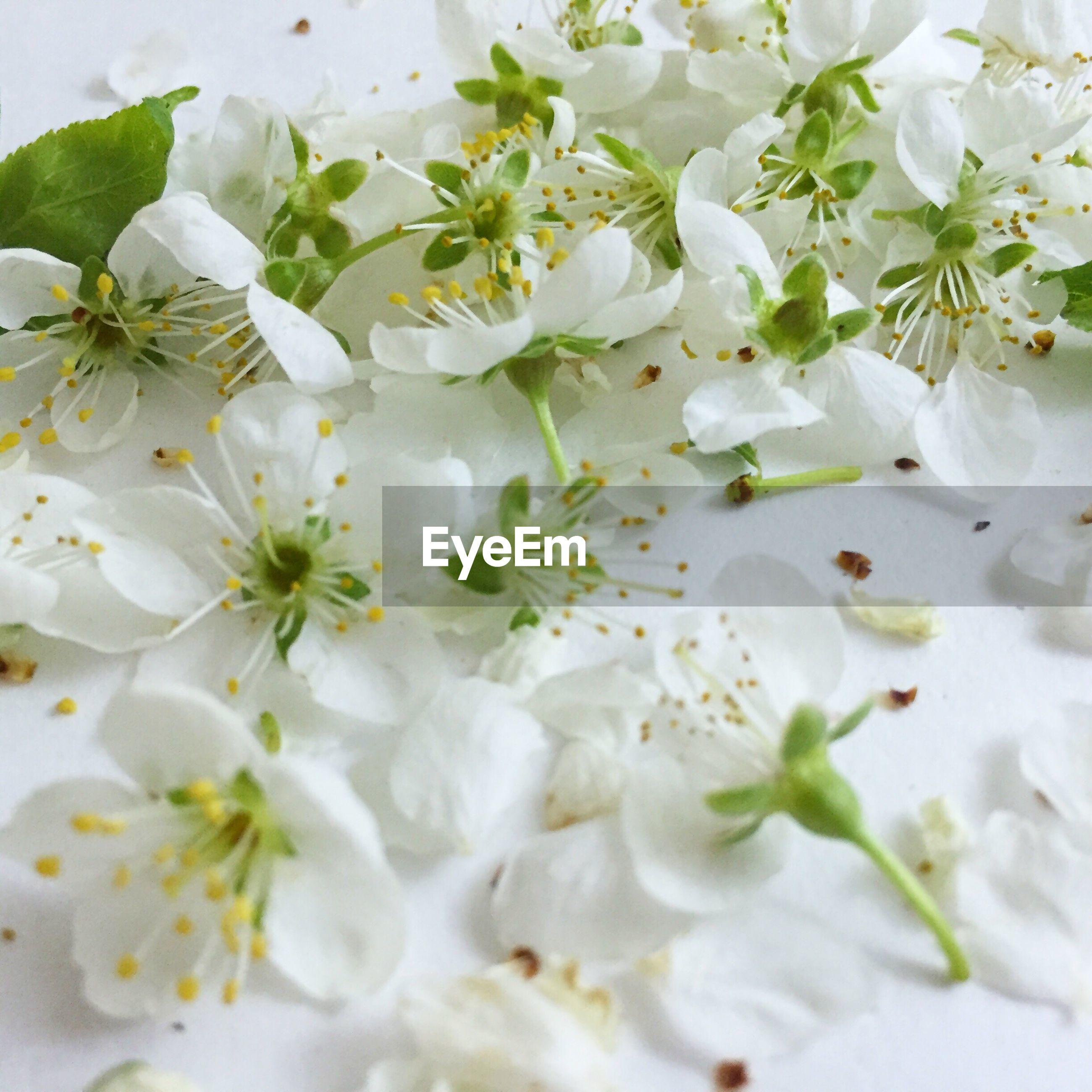 Full frame shot of white flowers