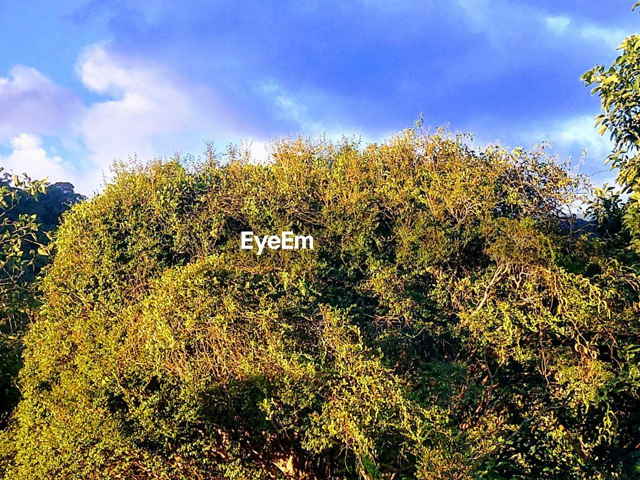 tree, plant, sky, cloud - sky, beauty in nature, growth, tranquility, no people, nature, day, low angle view, outdoors, tranquil scene, forest, green color, sunlight, non-urban scene, land, scenics - nature, yellow