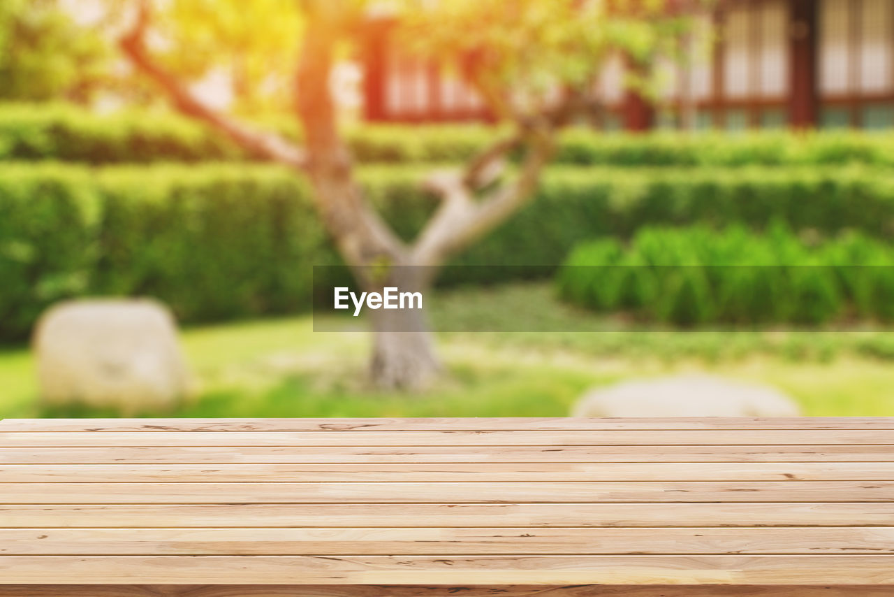 wood - material, plant, green color, focus on foreground, grass, nature, no people, day, growth, tree, outdoors, park, beauty in nature, park - man made space, tranquility, close-up, field, land, selective focus, boardwalk