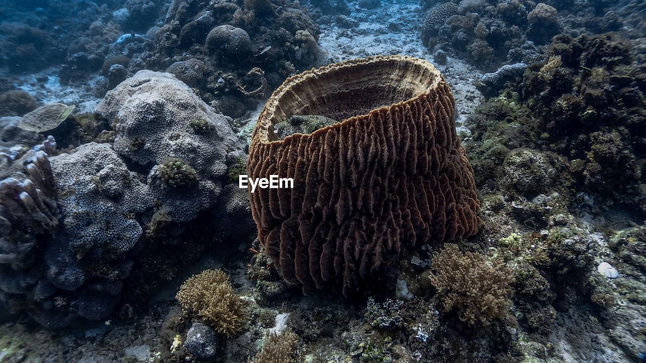 Barrel sponge coral and pufferfish at pagkilatan