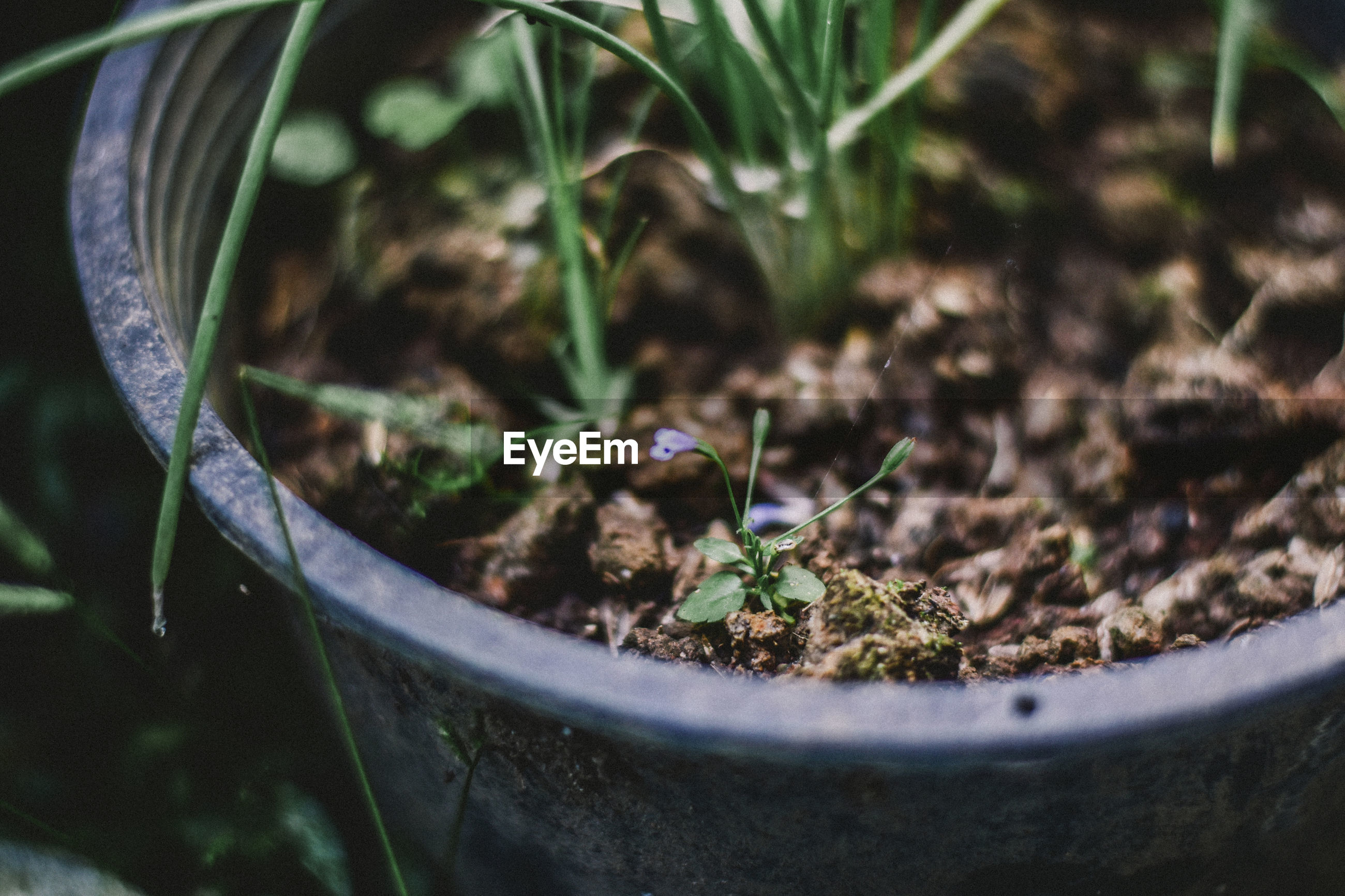 Close-up of potted plant in field
