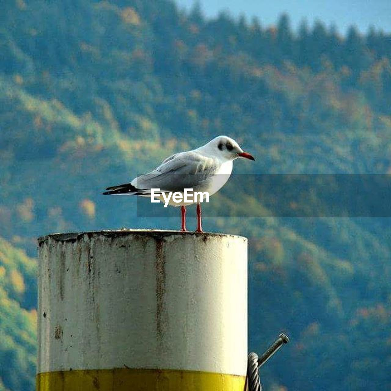 bird, animals in the wild, animal wildlife, perching, one animal, nature, seagull, day, outdoors, no people, animal themes, close-up, water, food