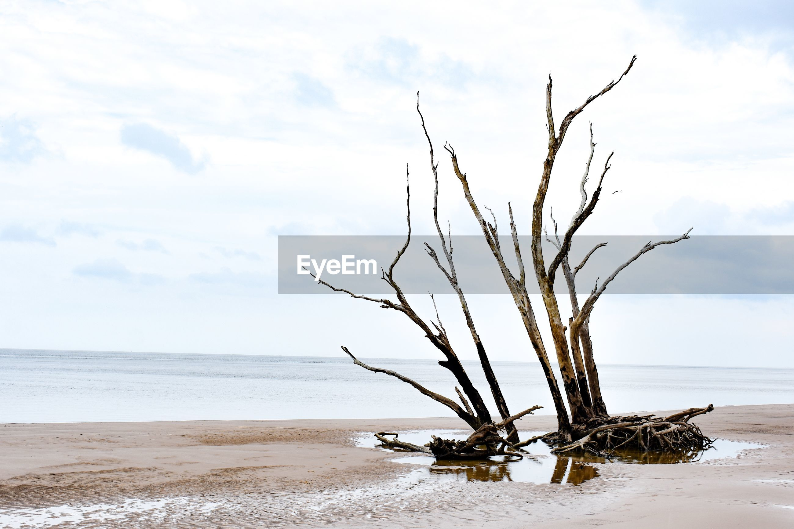 BARE TREE ON BEACH AGAINST SEA