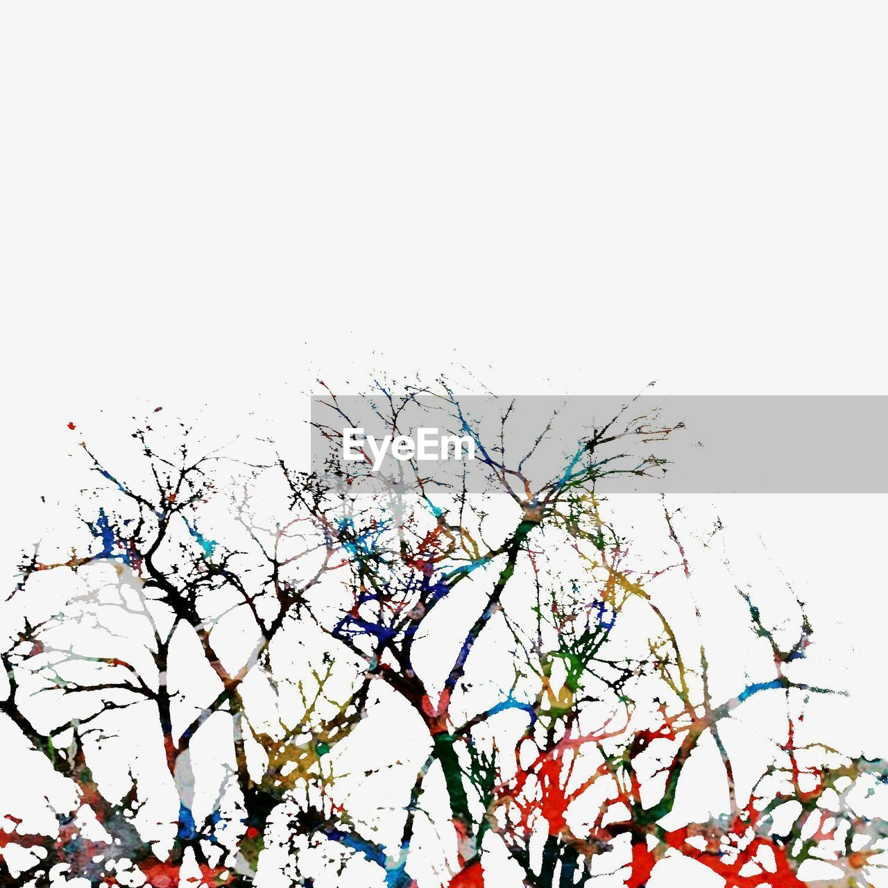 multi colored, clear sky, bare tree, branch, no people, nature, outdoors, day, tree, sky, close-up