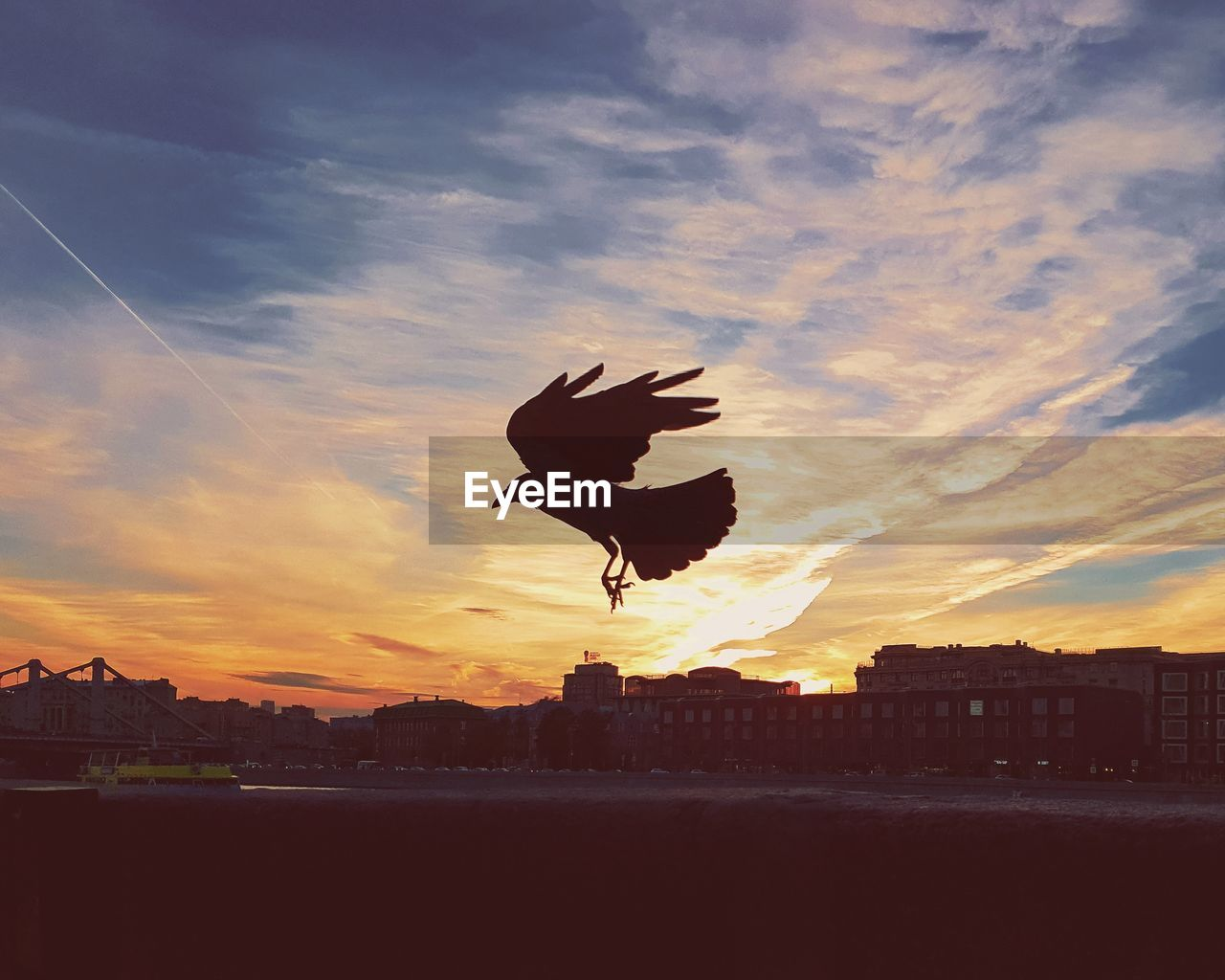 sunset, sky, bird, cloud - sky, animal themes, animal, one animal, vertebrate, animal wildlife, silhouette, flying, animals in the wild, architecture, built structure, building exterior, city, spread wings, nature, no people, beauty in nature, outdoors, cityscape