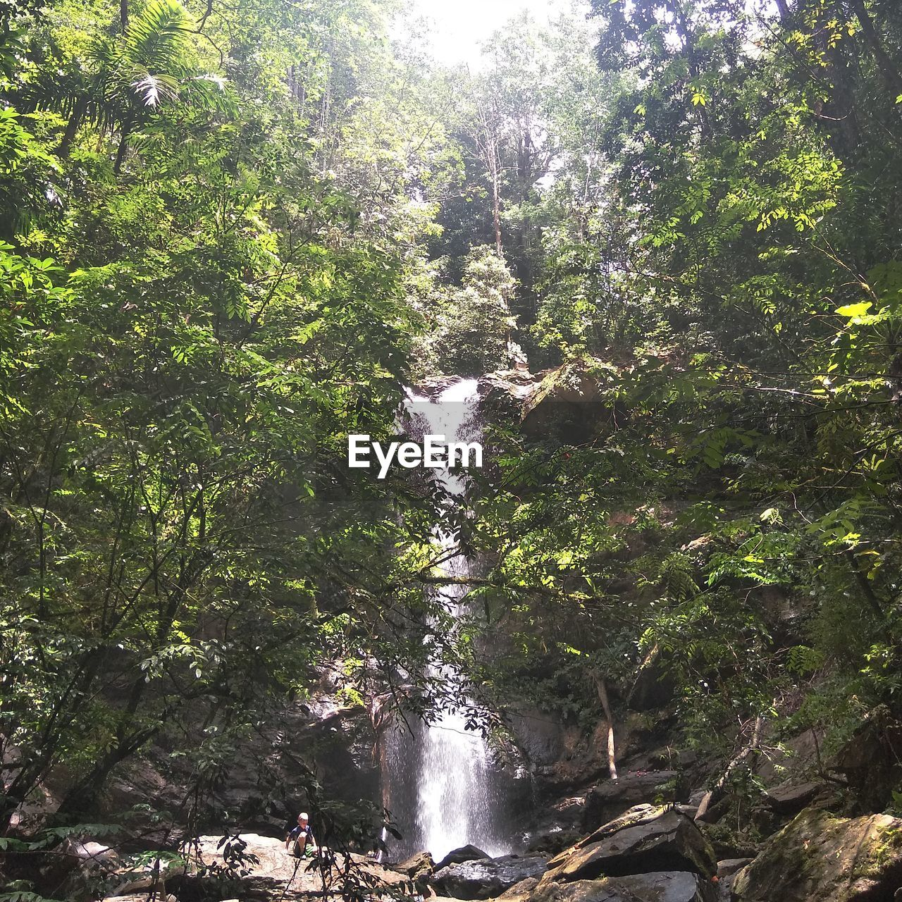 tree, plant, forest, land, water, nature, growth, scenics - nature, beauty in nature, environment, lush foliage, flowing water, waterfall, foliage, outdoors, motion, travel, day, people, rainforest, flowing