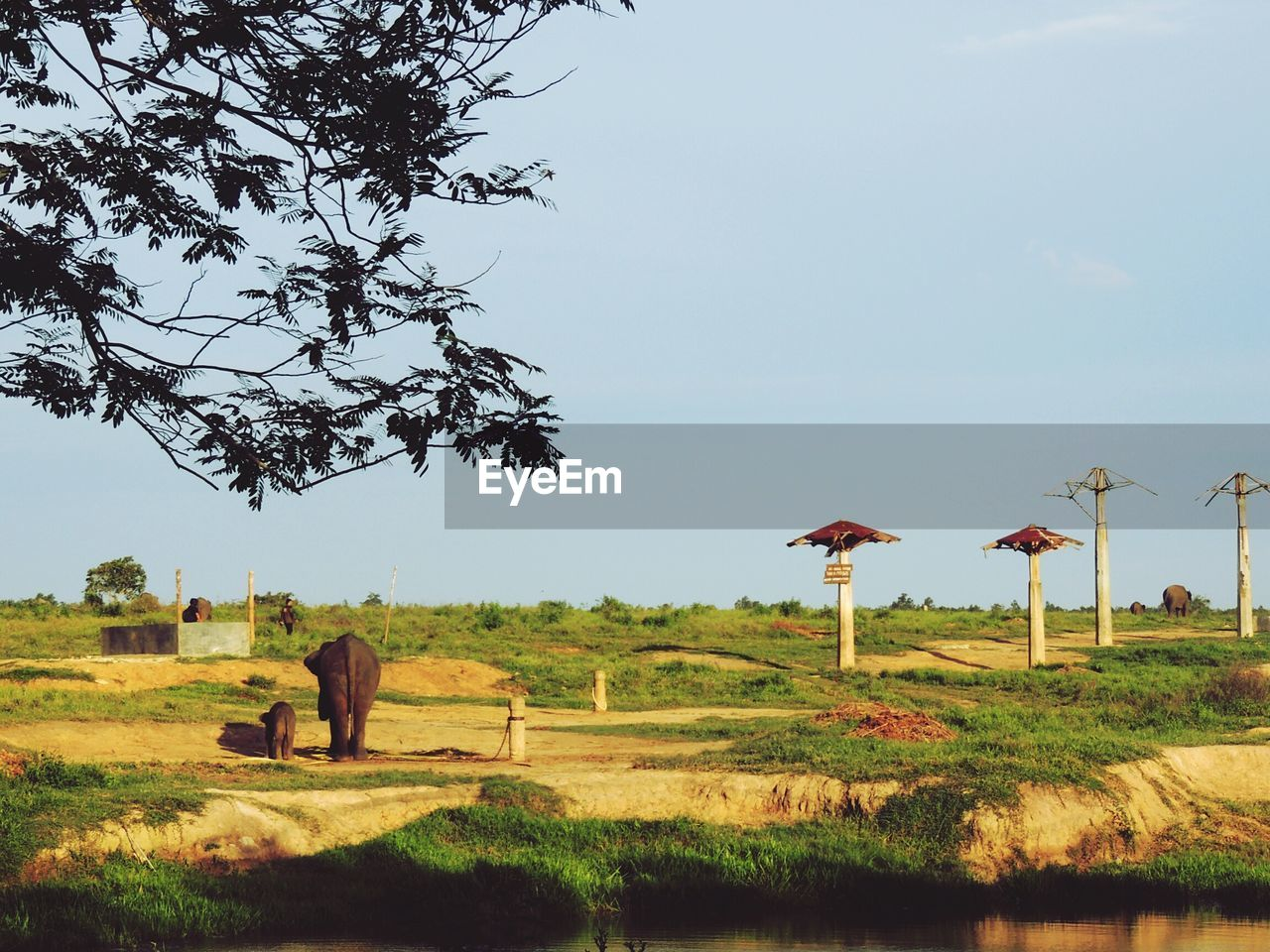 plant, tree, field, sky, environment, land, nature, landscape, grass, day, growth, animal themes, beauty in nature, tranquility, tranquil scene, agriculture, outdoors, animal, mammal, scenics - nature, no people
