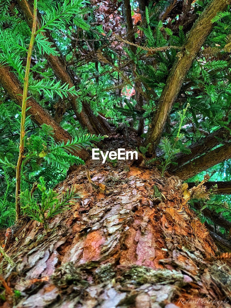 tree, plant, growth, forest, trunk, tree trunk, land, nature, green color, moss, day, tranquility, no people, beauty in nature, outdoors, close-up, woodland, plant part, water, bark