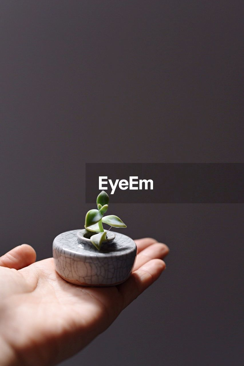 Cropped Hand Holding Small Potted Plant Against Gray Background