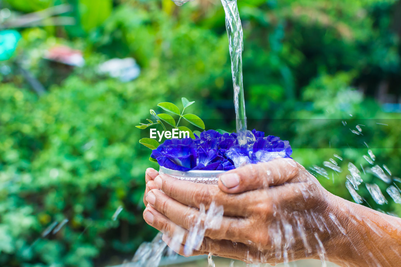Cropped image of hand holding blue flower pot under running water