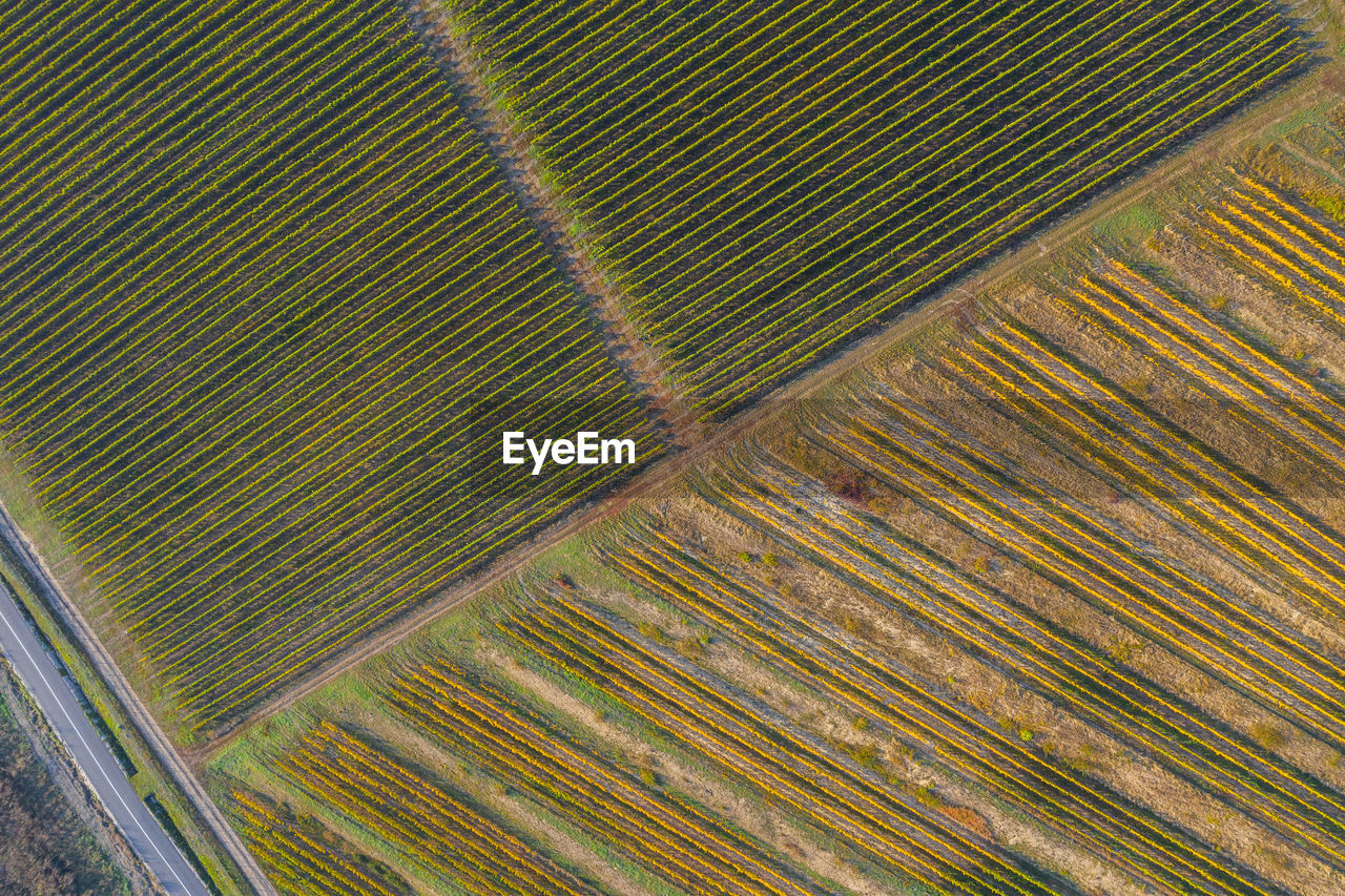 Scenic view of vineyard