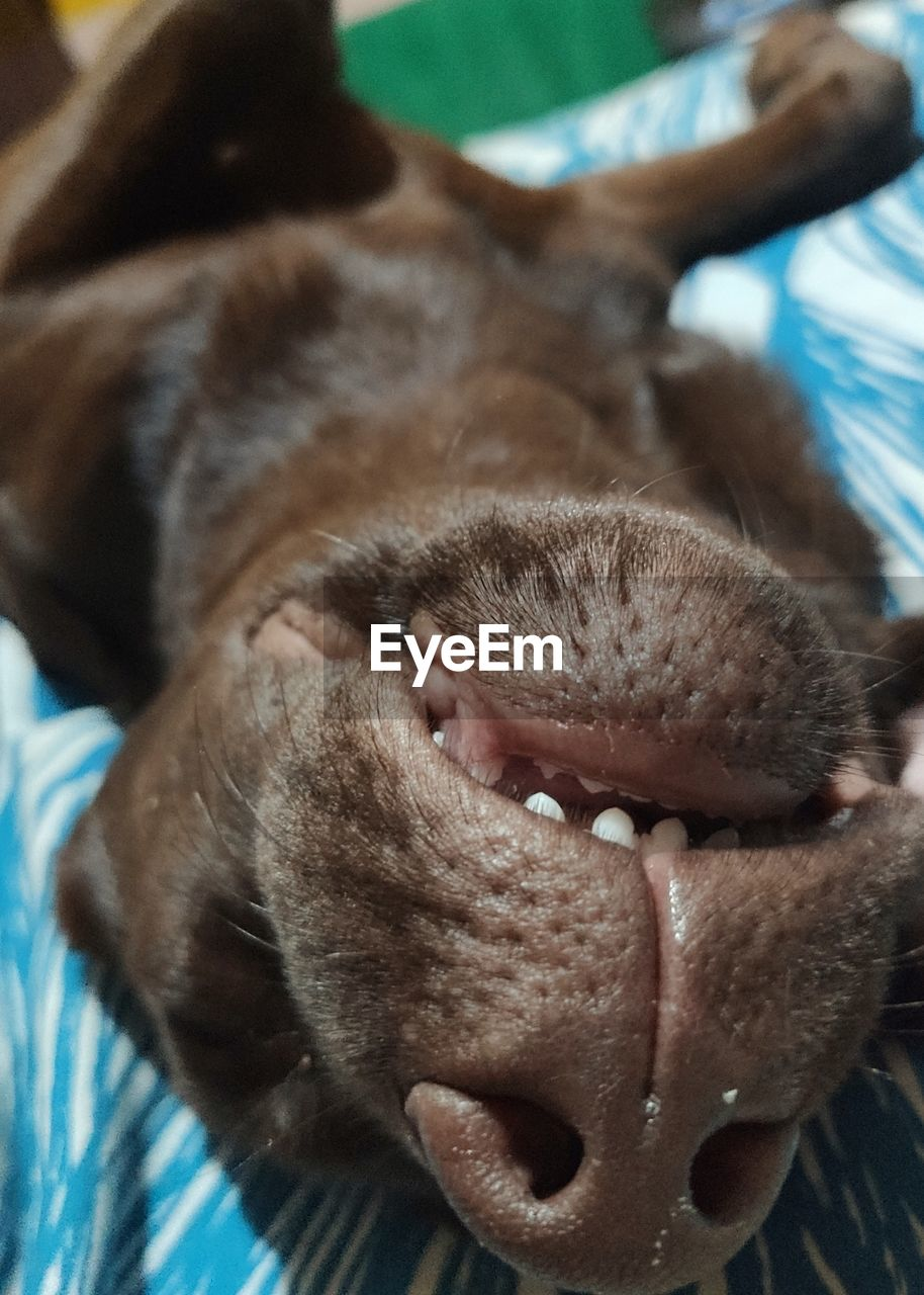 CLOSE-UP OF DOG RELAXING