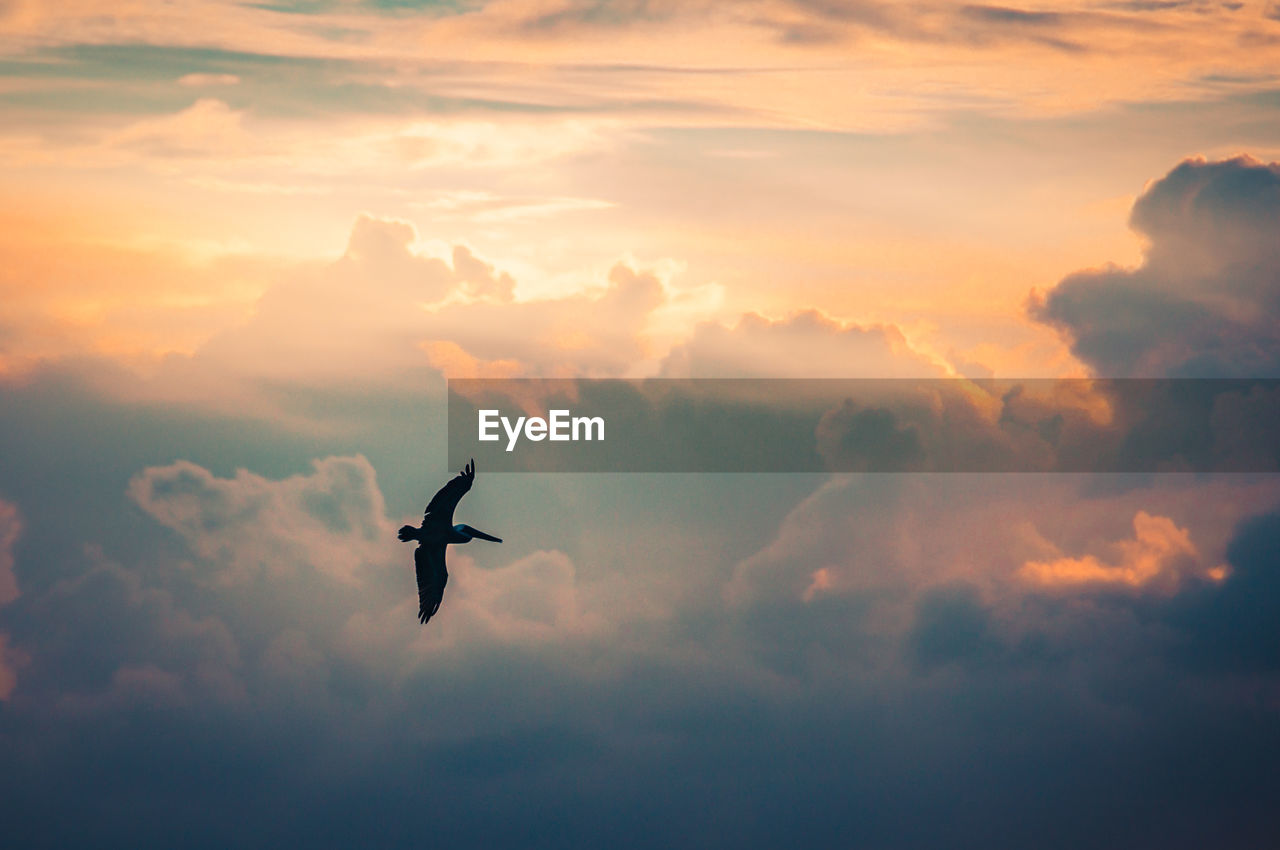 flying, bird, sky, animals in the wild, mid-air, animal themes, sunset, spread wings, silhouette, cloud - sky, one animal, animal wildlife, nature, outdoors, low angle view, no people, beauty in nature, day, energetic, bird of prey