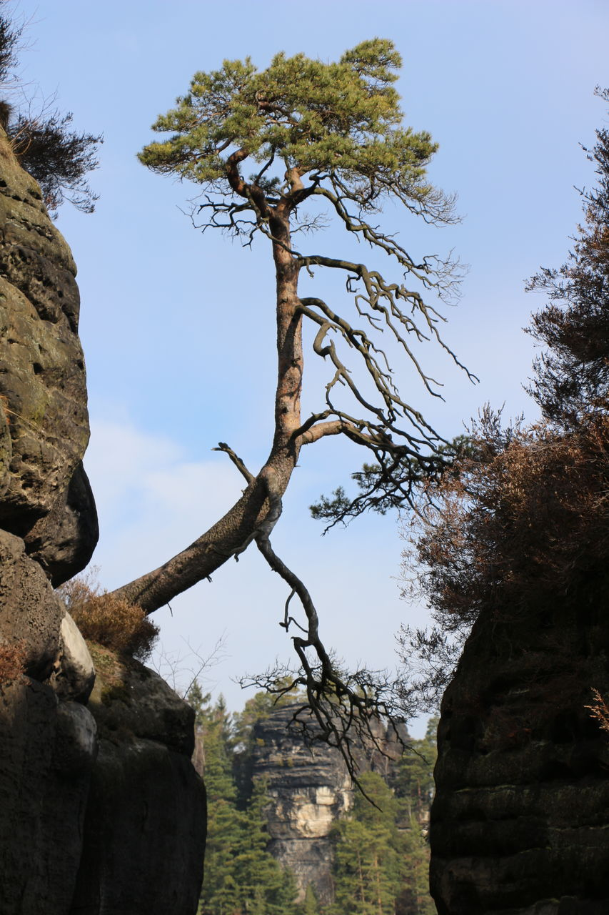 tree, low angle view, no people, day, sky, branch, nature, outdoors, tranquility, beauty in nature, ancient civilization
