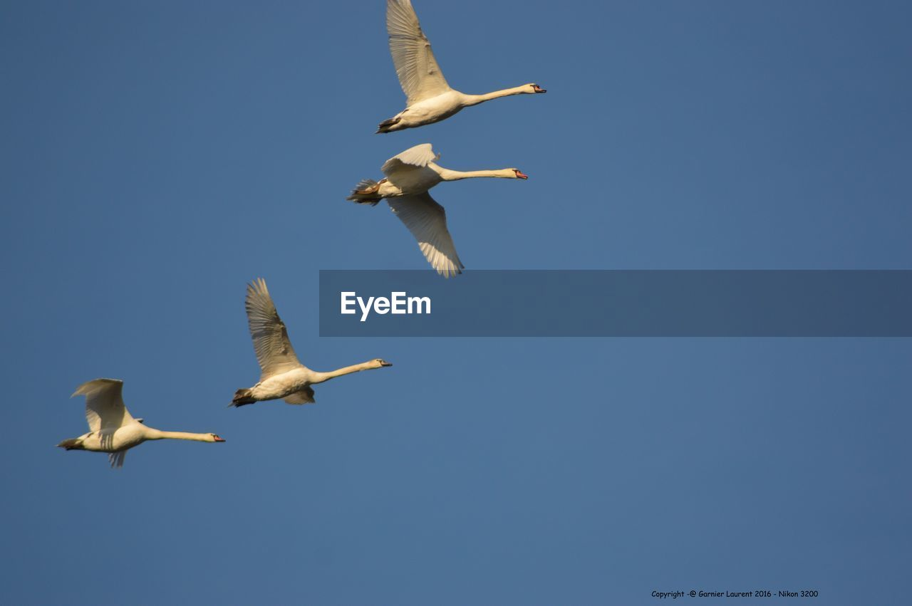 flying, animals in the wild, animal themes, bird, spread wings, animal wildlife, copy space, low angle view, mid-air, nature, day, outdoors, no people, seagull, togetherness, clear sky, large group of animals, beauty in nature, sky