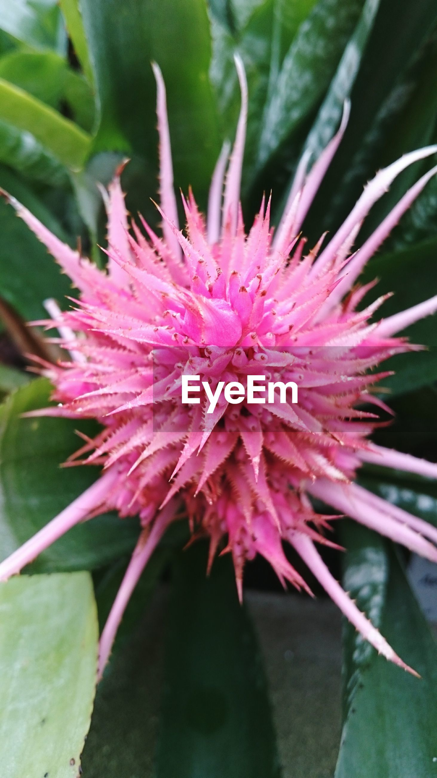 flower, freshness, petal, flower head, growth, fragility, close-up, beauty in nature, single flower, pink color, nature, plant, focus on foreground, blooming, leaf, pollen, stamen, in bloom, blossom, outdoors