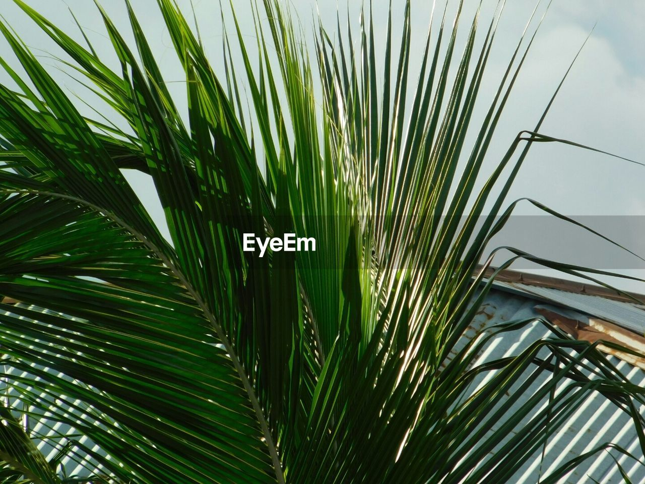 growth, green color, outdoors, day, plant, nature, no people, sky, close-up, palm tree, beauty in nature