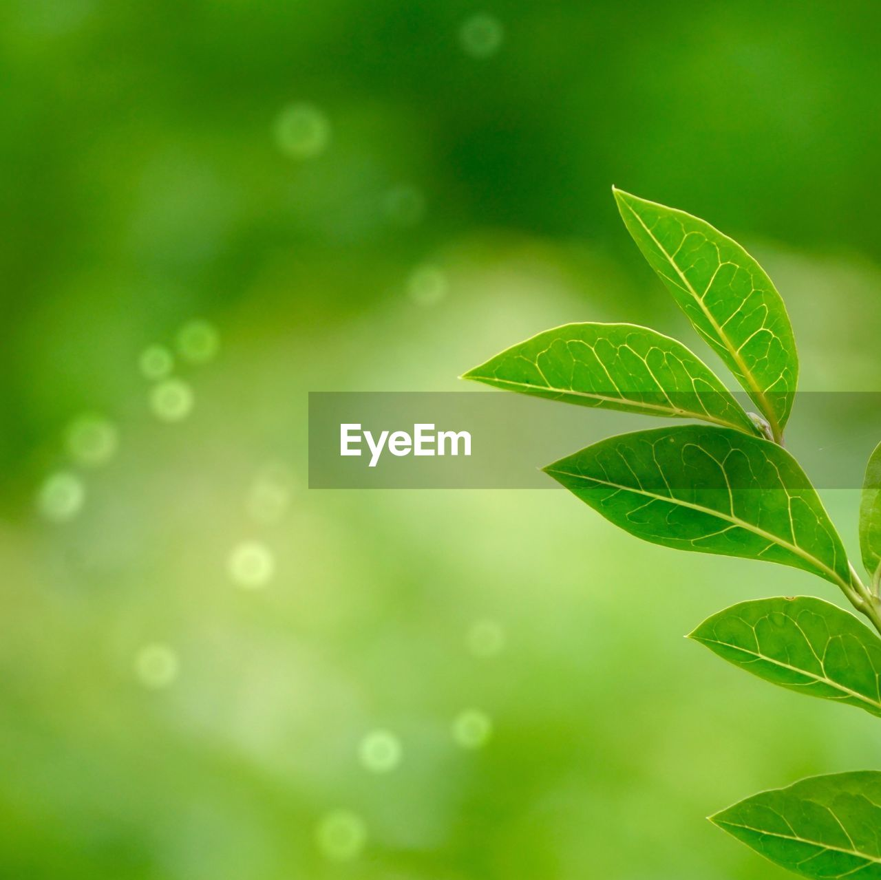 leaf, plant part, green color, plant, nature, growth, close-up, no people, beauty in nature, day, focus on foreground, leaves, freshness, vulnerability, selective focus, fragility, outdoors, leaf vein, water, tree, clover