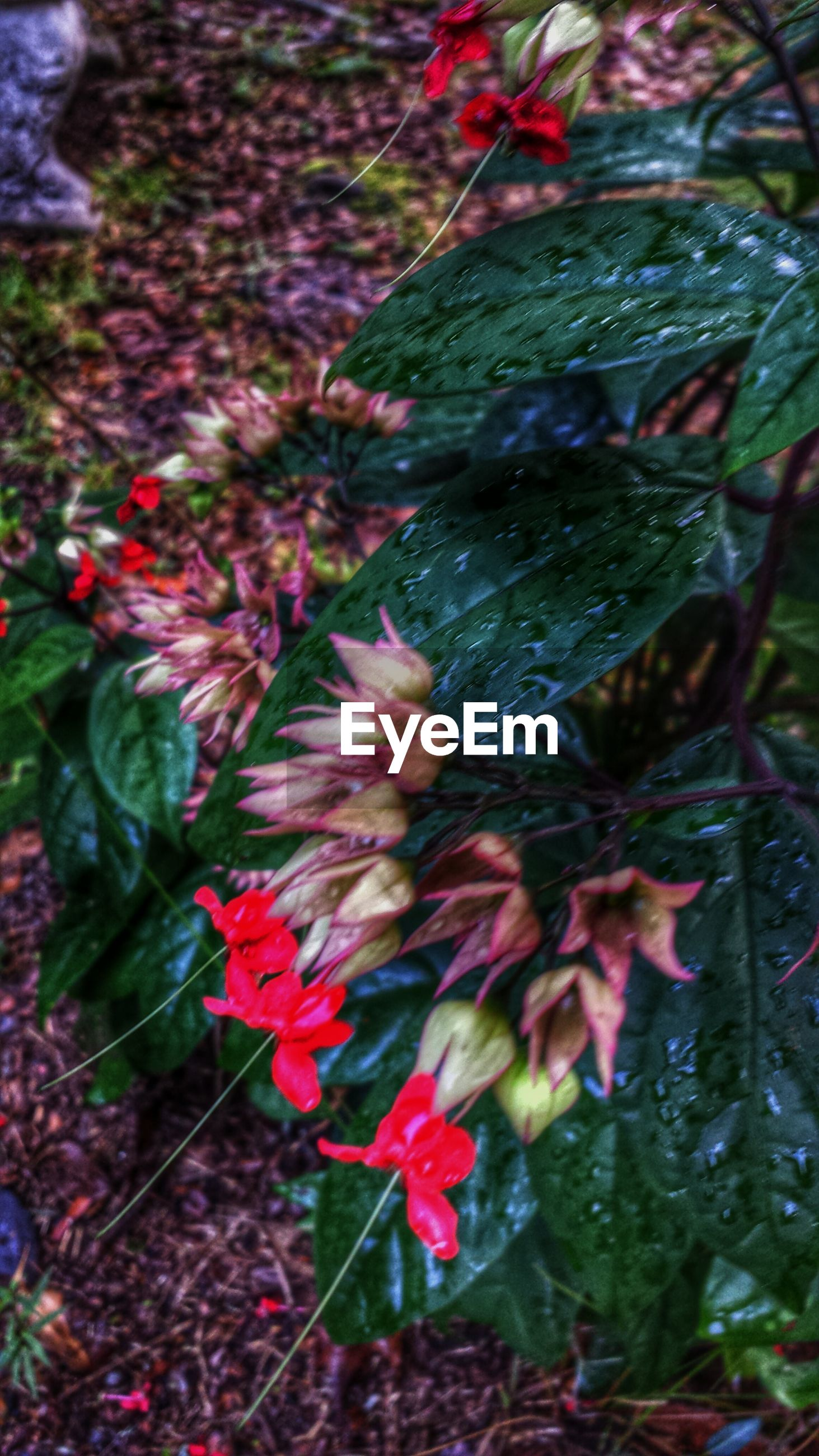 flower, growth, leaf, freshness, beauty in nature, nature, plant, fragility, red, pink color, petal, close-up, high angle view, season, day, outdoors, focus on foreground, blooming, tranquility, water